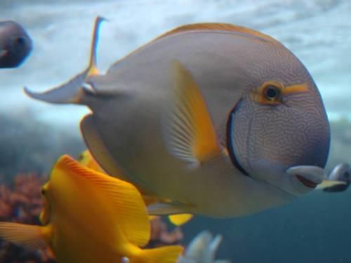 Vista Wallpaper Fish