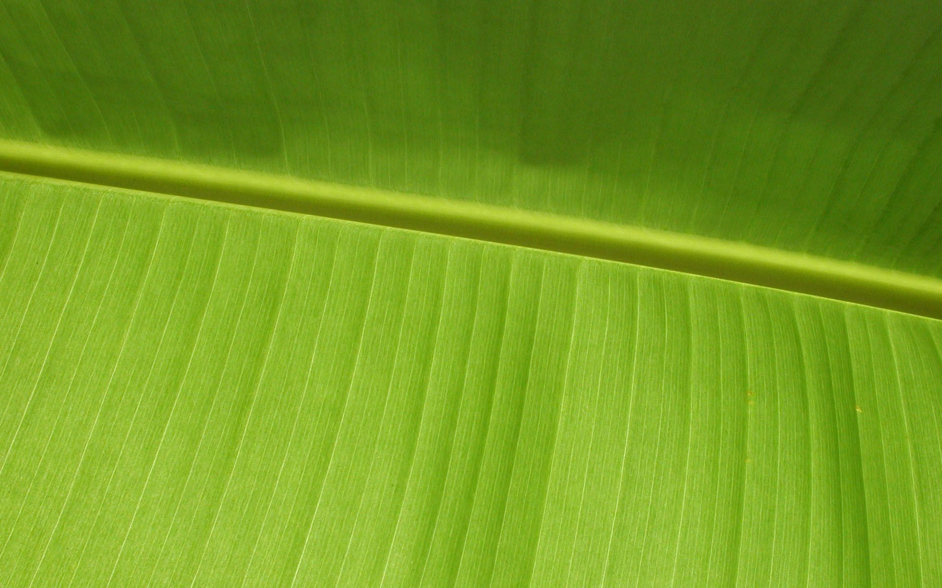 Vista Wallpapers – Widescreen » Vista Wallpaper Leaf
