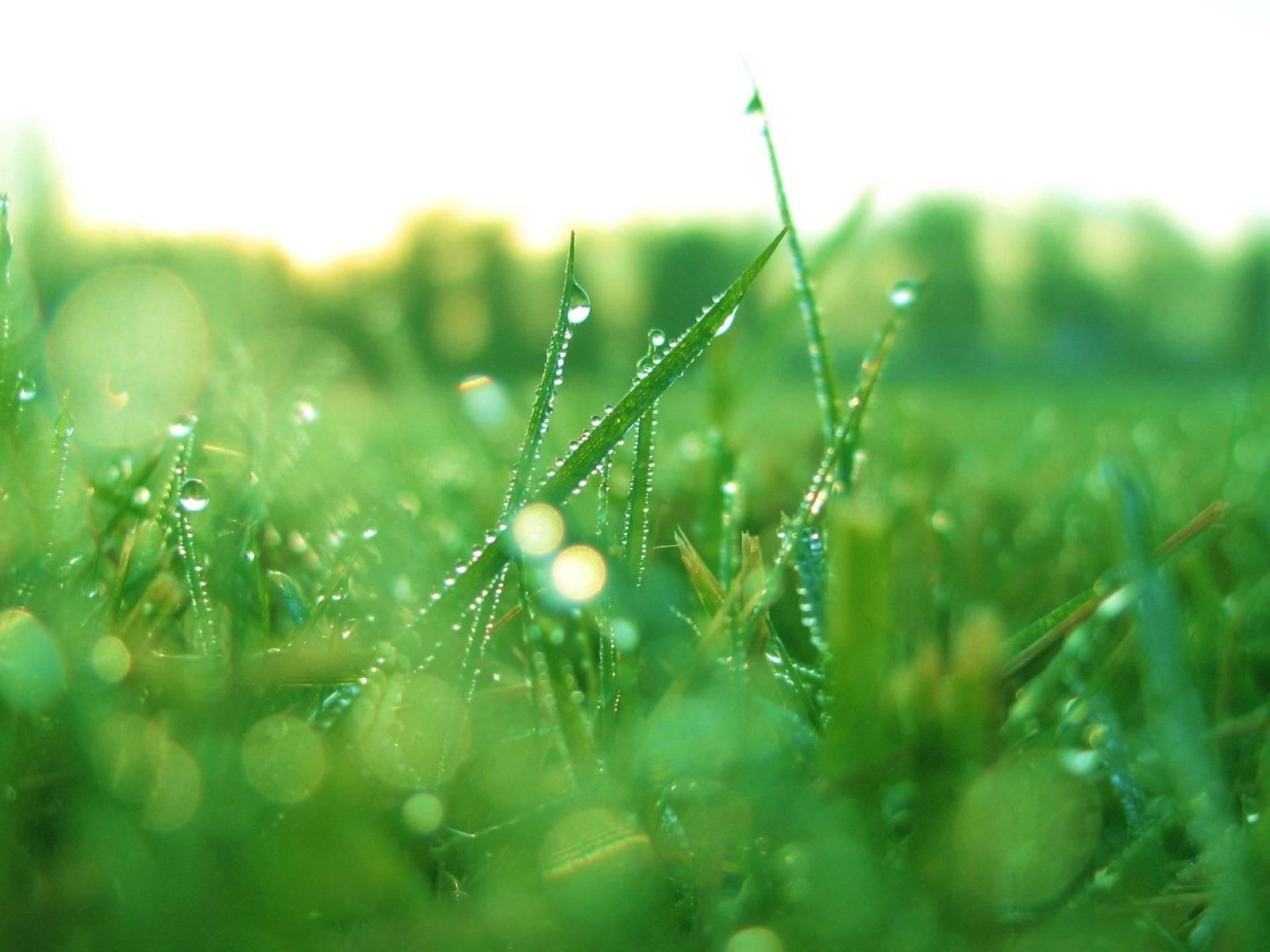 роса на траве  № 2510464 загрузить